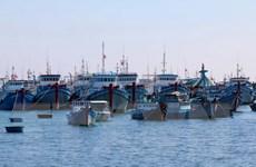 Hiệu quả những chuyến vươn khơi đầu năm của ngư dân đảo Phú Quý