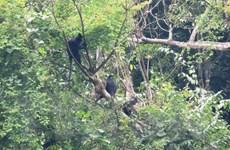 Quảng Bình: Thả 9 động vật quý hiếm về môi trường tự nhiên