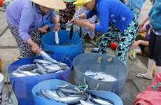 Bình Định: Ngư dân đánh cá ngừ đại dương vẫn lãi dù giá giảm