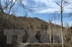 Hàng nghìn ha rừng đặc dụng Copia có nguy cơ bị cháy