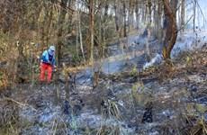 Điện Biên: Nguy cơ cháy cao ở khu vực rừng bị khô sau băng tuyết