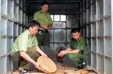 Phát hiện thu giữ gần 2000 thớt gỗ nghiến không rõ nguồn gốc