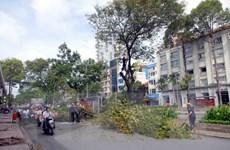 Sắp chặt hạ hàng chục cây cổ thụ để làm ga metro Ba Son
