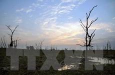 [Photo] Nước mặn tấn công các khu bảo tồn ngập nước Ramsar