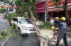 Thành phố Hồ Chí Minh: Cây xanh gãy đổ đè bẹp 2 xe ôtô