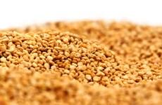 """Bolivia phát triển """"hạt vàng"""" nhằm bảo đảm an ninh lương thực"""