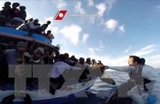 Italy giải cứu gần 1.000 người di cư trên Địa Trung Hải