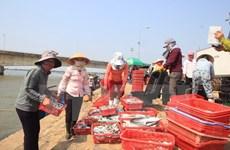 Sẽ công bố kết quả kiểm nghiệm sự cố cá chết vào đầu tháng 9