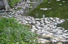 Cá chết hàng loạt trên sông Salung, người dân Quảng Trị lại hoang mang
