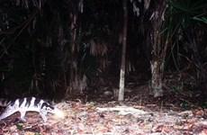 Thừa Thiên-Huế: Phát hiện 9 loài động vật đang bị đe dọa trên toàn cầu