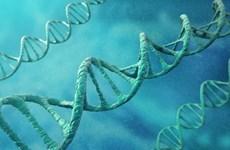 Phát hiện gen ngăn chặn sự phát triển của bệnh Alzheimer