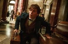 """""""Harry Potter tiền truyện"""" thu 75 triệu USD trong tuần mở màn"""