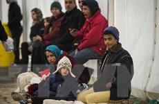 Số lượng người di cư đến châu Âu giảm mạnh trong năm 2016