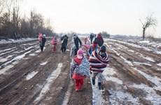 Chính trường Áo căng thẳng vì lượng người tị nạn gia tăng