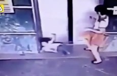 [Video] Hành động bất ngờ của bà mẹ cứu con gái bị kẹp thang máy