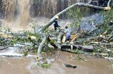 Gió bão lật đổ cây khiến 20 sinh viên thiệt mạng tại Ghana