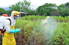 Nghiên cứu thành công thuốc diệt nấm sinh học chống bệnh thán thư