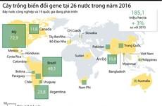 [Infographics] Thông tin về cây trồng biến đổi gene tại 26 quốc gia