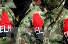 Colombia: ELN sẽ phóng thích hai phóng viên người Hà Lan