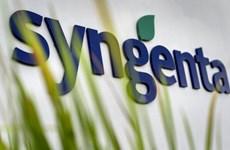 Nông dân trồng ngô ở Mỹ thắng trong vụ kiện với Syngenta
