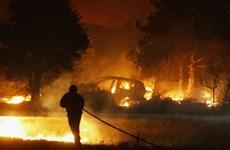 Cháy rừng hoành hành Đông Nam nước Pháp, nước lũ bao vây Ấn Độ