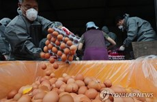 """Chính phủ Hàn Quốc xin lỗi người dân về vụ """"trứng bẩn"""""""