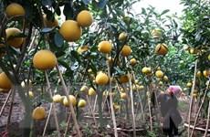 Giới thiệu tiềm năng xuất khẩu nông, lâm, thủy sản sang Trung Quốc