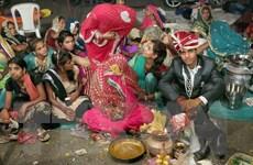 Gần 100 người ở Ấn Độ nhập viện do nghi ngộ độc thực phẩm