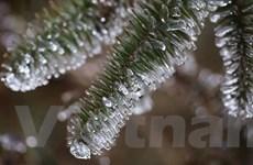 Cảnh cây cỏ đóng băng tuyệt đẹp trên Cổng trời đèo Ô Quy Hồ