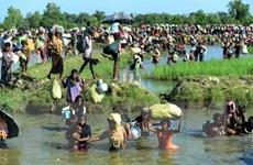 Bangladesh phối hợp với Liên hợp quốc hồi hương người Rohingya