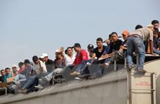 """Ông Trump gây sốc, gọi người nhập cư từ Mexico là """"động vật"""""""