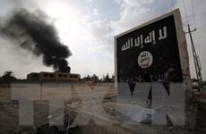 Iraq tiêu diệt thủ lĩnh và 5 phiến quân của tổ chức IS