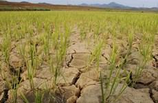 Có thể sẽ xảy ra cuộc khủng hoảng lương thực thảm khốc ở Triều Tiên