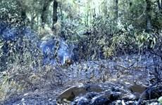 Khánh Hòa: Khoảng 100ha rừng phòng hộ bị cháy, thiệt hại hàng tỷ đồng