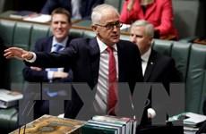 Australia: Thủ tướng bị hạ bệ Turnbull sẽ rời quốc hội trong tuần này