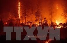 Lại xảy ra cháy rừng tại California, lửa sẽ lan rộng trong vòng 24 giờ