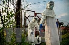Phát hiện 'lá chắn' chống virus Ebola trong tế bào người