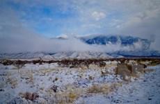 Bão tuyết hoành hành mạnh ở Canada, tuyết rơi dày tới 50cm