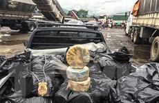 Tịch thu 1,3 tấn cocaine giấu trong trái cây vận chuyển tới Hà Lan