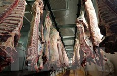 Séc ra lệnh kiểm tra toàn bộ thịt bò nhập khẩu từ Ba Lan