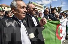 Algeria: Các thẩm phán từ chối giám sát cuộc bầu cử tổng thống