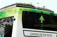 [Video] Xe buýt với vườn cây trên nóc chính thức lăn bánh