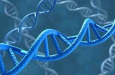 Somalia lần đầu tiên sử dụng ADN để kết án các 'yêu râu xanh'