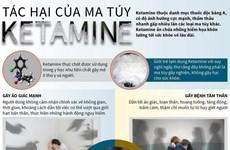 [Infographics] Tìm hiểu về các tác hại của ma túy ketamine