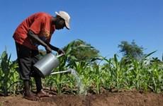 Cách để châu Phi giải quyết vấn đề an ninh lương thực