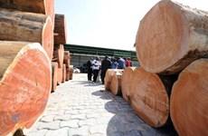 Gabon tiến hành cải tổ nội các sau vụ bê bối buôn lậu gỗ quý