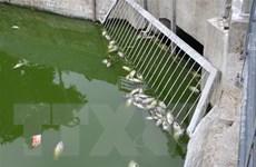 Đà Nẵng: Liên tục vớt hàng tấn cá chết tại hồ Thạc Gián