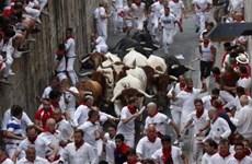 Lễ hội rượt bò San Fermin khiến nhiều du khách bị thương