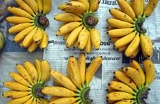 Lào gặp khó khi xuất khẩu hàng nông sản sang Trung Quốc