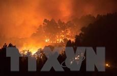 Hơn 3.400ha rừng ở Tây Ban Nha bị thiêu cháy, ngọn lửa cao 50m